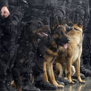 police-dogs-06